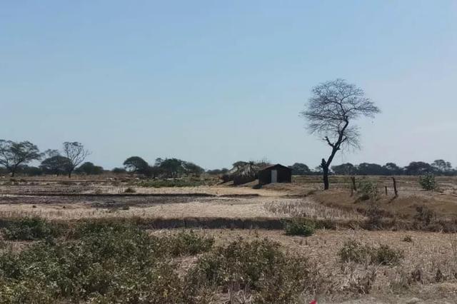 Petani Sawah Lembor Keluhkan Pemda Manggarai Barat Tidak Tepati Kesepakatan (640827)