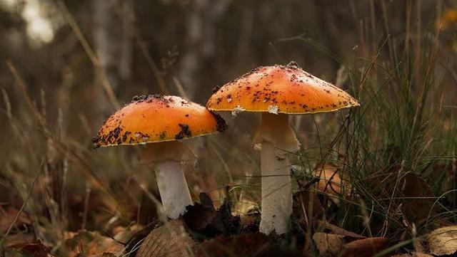 Jangan Sampai Salah, Ini Jenis Jamur yang Bisa Kamu Makan Saat Tersesat di Hutan (51551)