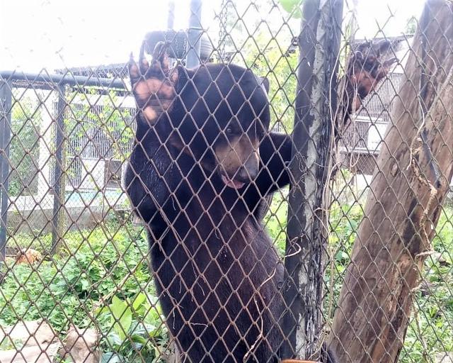Bali Wildlife Rescue Center, Tempat Berlatih Satwa Sebelum Pulang ke Habitatnya (89338)