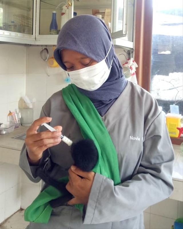Bali Wildlife Rescue Center, Tempat Berlatih Satwa Sebelum Pulang ke Habitatnya (89340)