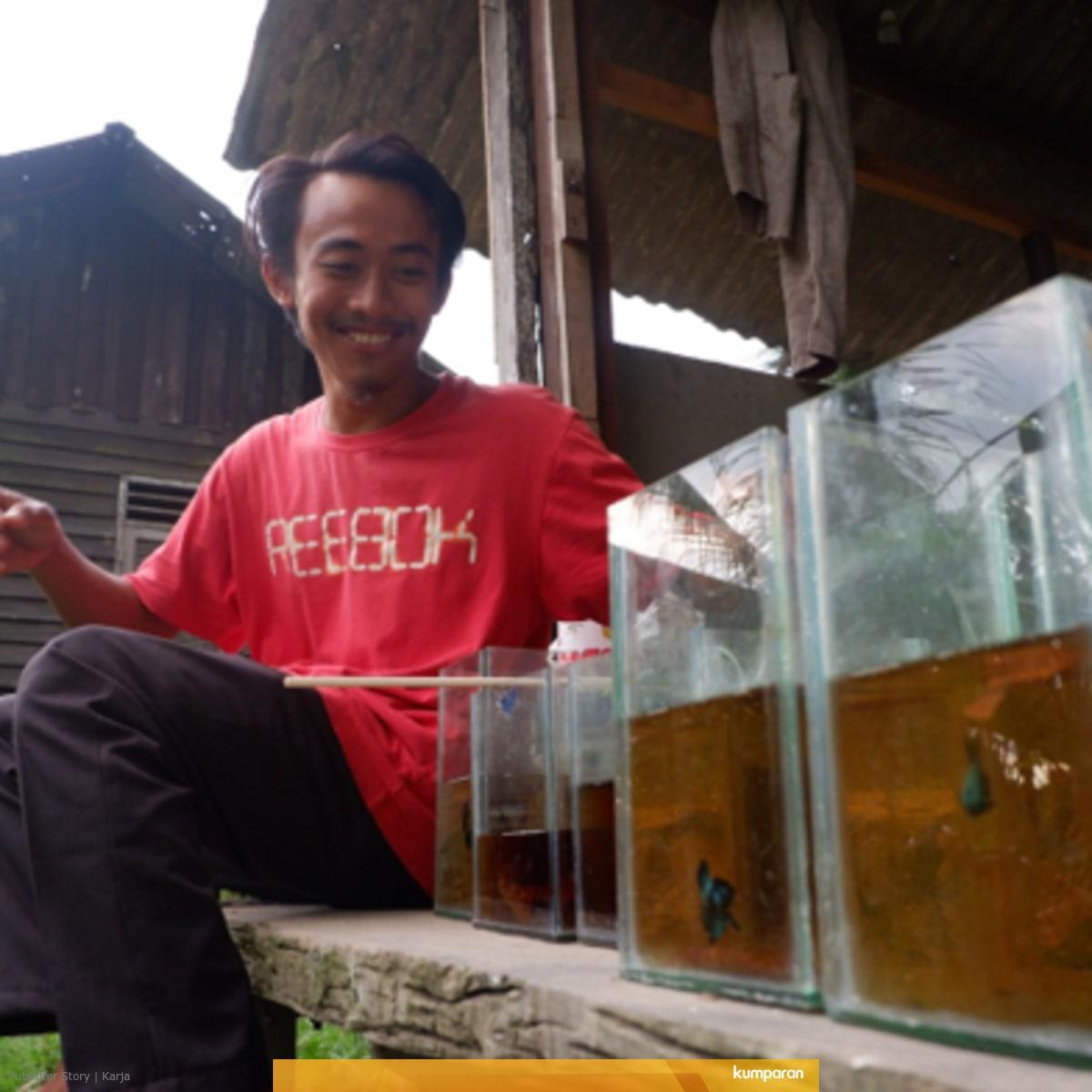 Tips Bisnis Ikan Cupang Dengan Modal Minim Ala Fathur Rahman Kumparan Com