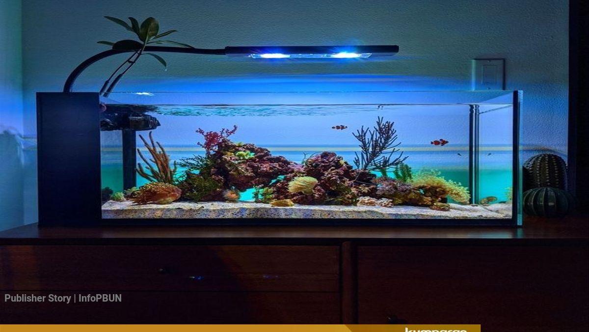 Begini Cara Memelihara Ikan Di Aquarium Kumparan Com