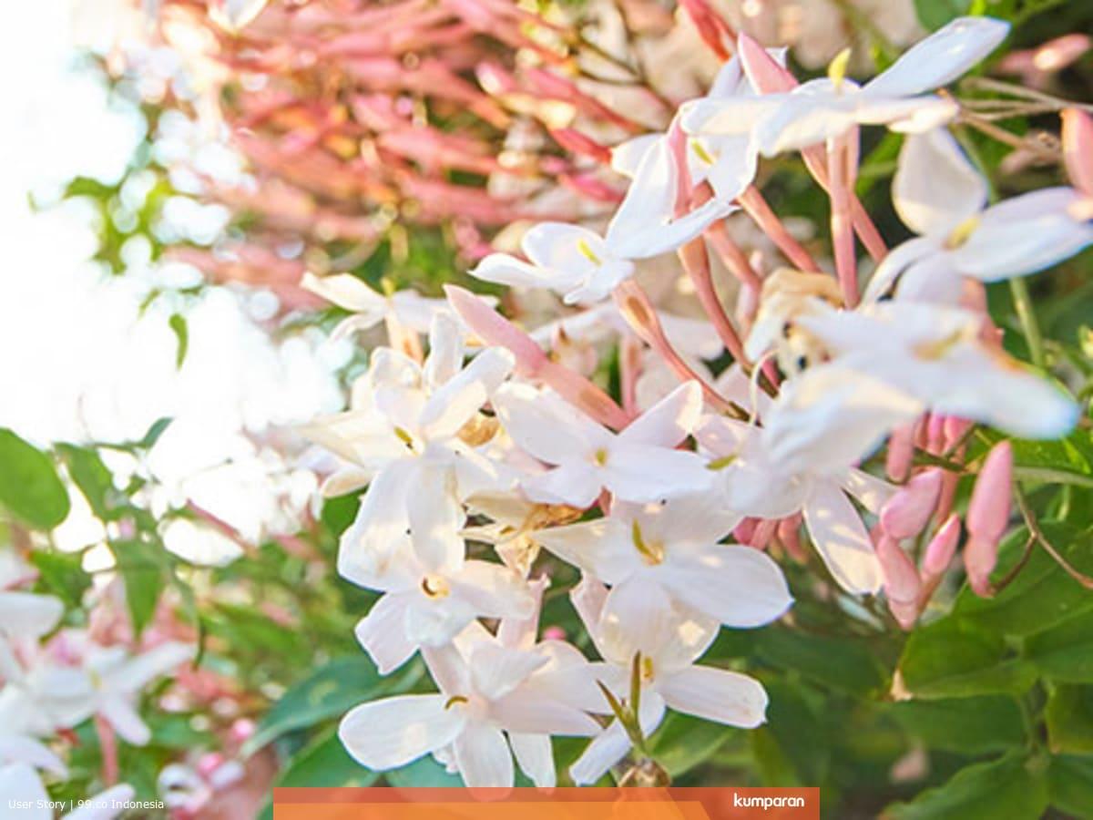 Memperindah Pekarangan Rumah Dengan 7 Macam Bunga Cantik Kumparan Com