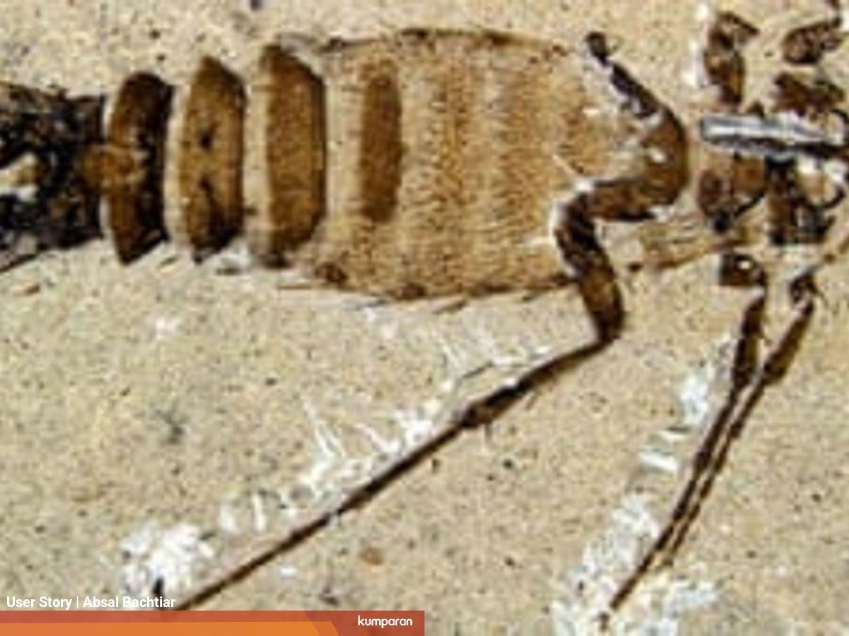 Ternyata Kutu Telah Hidup Dari Zaman Dinosaurus Kumparan Com