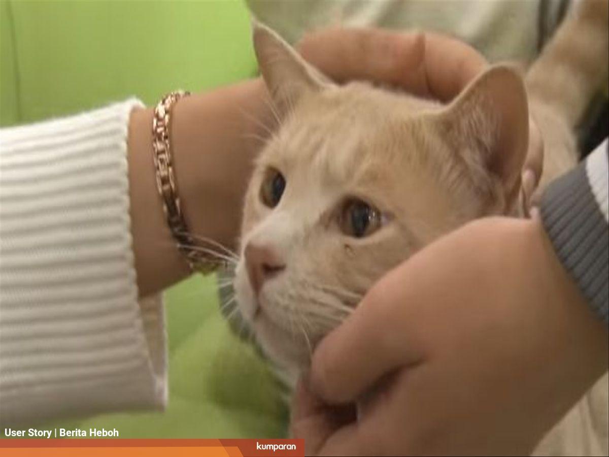 Kisah Taekgang Kucing Yang Dirawat 360 Mahasiswa Dan Dosen Kumparan Com
