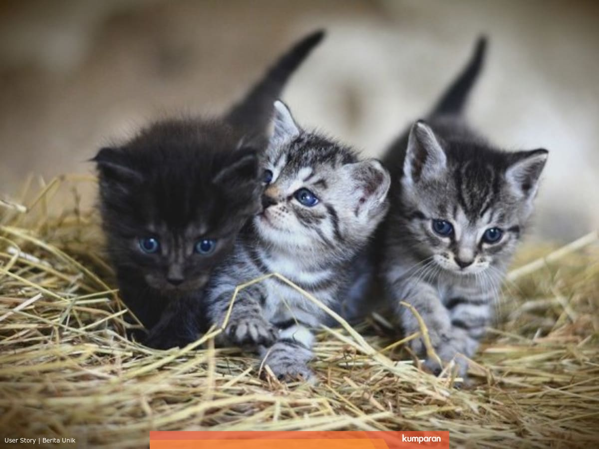 Kenapa Anak Kucing Dari Satu Induk Punya Warna Beda Beda Ini Alasannya Kumparan Com