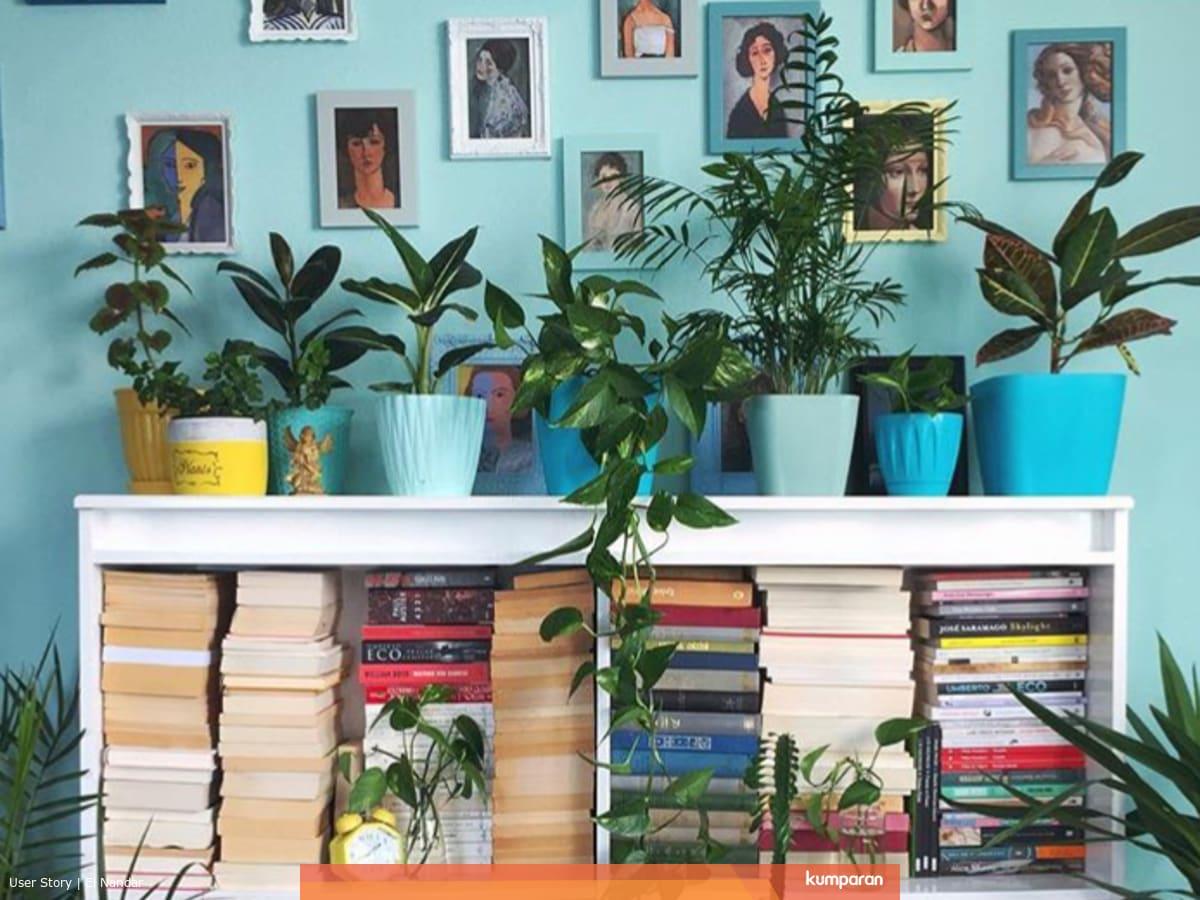 5 Tanaman Obat Yang Bisa Untuk Tanaman Hias Rumahmu Kumparan Com