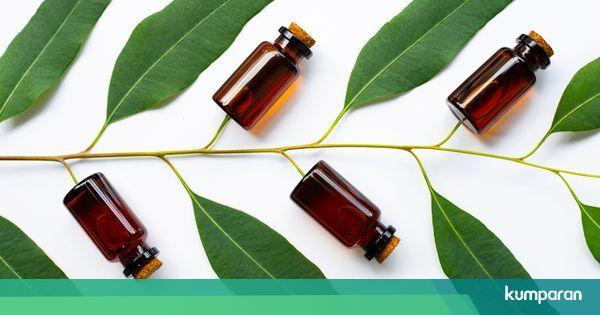 5 Manfaat Eucalyptus Bagi Kesehatan, Tanaman yang Diklaim Kementan sebagai Antivirus Corona - TribunStyle.com