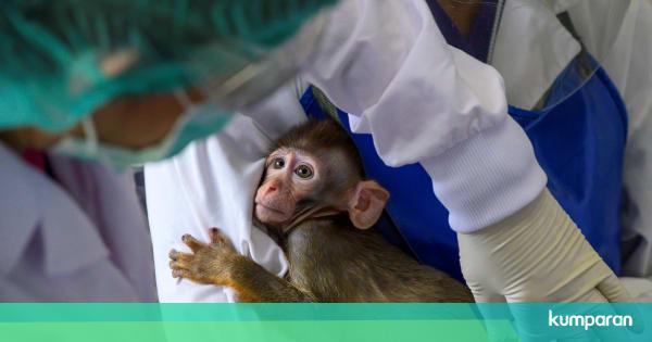 Foto: Peneliti di Thailand Uji Vaksin Virus Corona