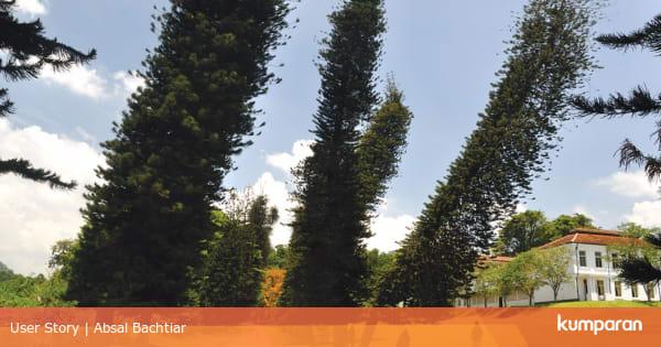 Pohon yang Tumbuh Miring ke Arah Khatulistiwa - kumparan.com