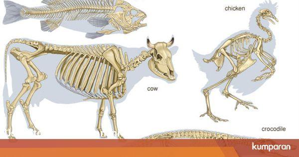 Jenis Hewan Avertebrata Terdiri Dari Ciri Ciri Dan Jenis Hewan Vertebrata Atau Bertulang Belakang Kumparan Com