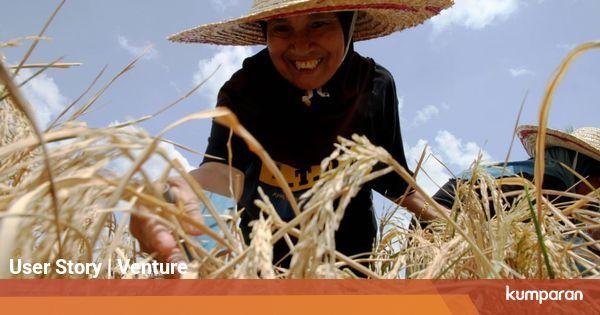 Agropreneur, Bisnis di Bidang Pertanian yang Menjanjikan ...