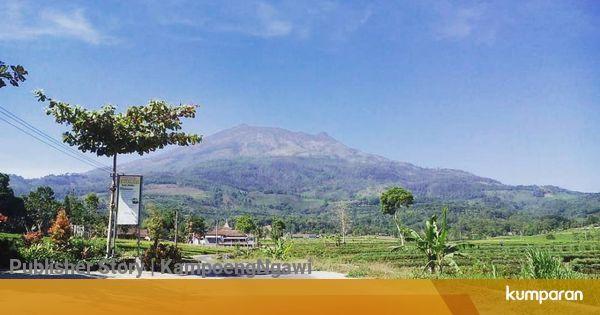 Gambar Kebun Teh Jamus Ngawi Kkn Ppm Ugm Bangun Homestay Di Dekat Kebun Teh Jamus Ngawi Kumparan Com