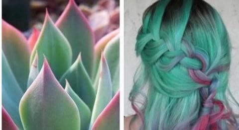 Succulent Hair