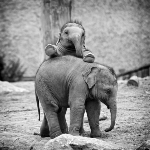 8 Potret Kehidupan Anak Gajah yang Menggemaskan!