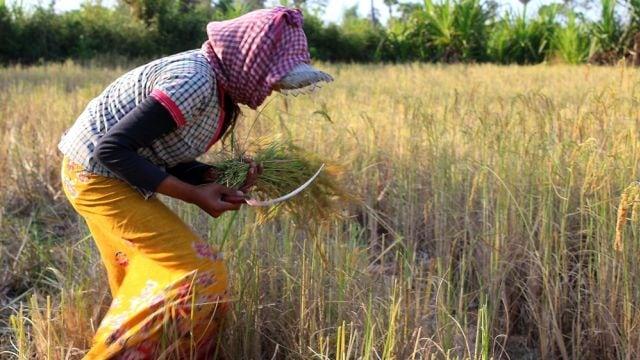 Perempuan Adalah Penemu Ilmu Pertanian Kumparancom