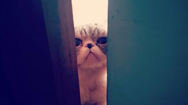 5 Tanda Kucing Peliharaanmu Sudah Masuk Usia Tua