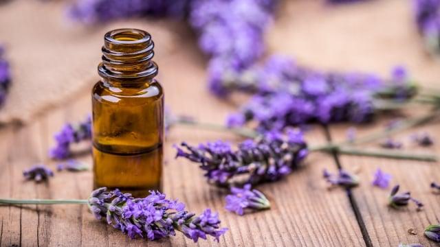 Image result for lavender menyembuhkan jerawat