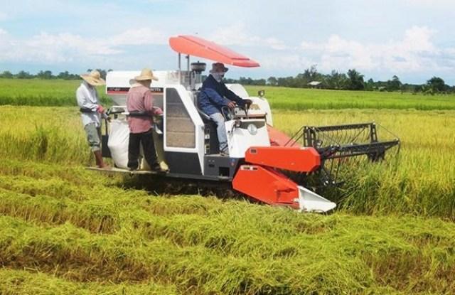 Tantangan Dalam Perkembangan Pertanian Indonesia Kumparancom