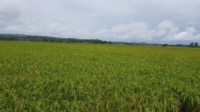 Corporate Farming Ala Bank Indonesia Angkat Derajat Petani Dari