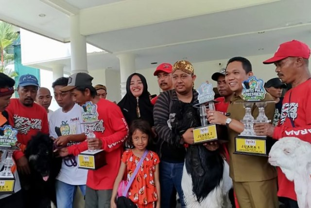 Pakai Shampo Konditioner Dan Minum Susu Kambing Ini Sabet Piala
